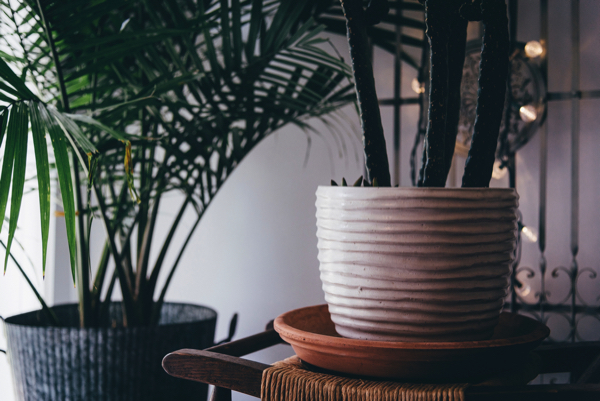 Transform Your Home In 2019 With Indoor Plants Gardeners Dream Blog
