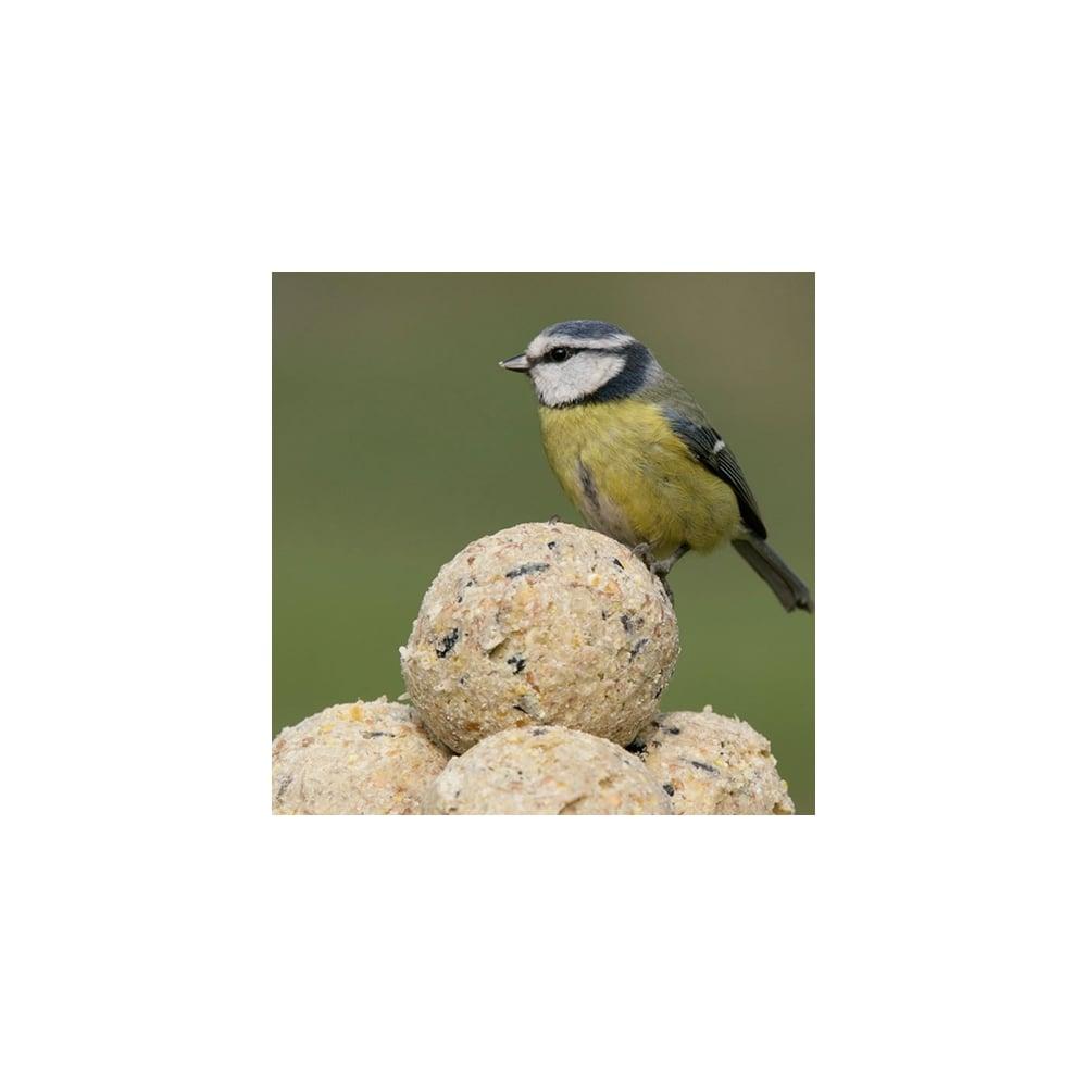 dawn chorus 50 x no net fat balls bird food quality feed. Black Bedroom Furniture Sets. Home Design Ideas