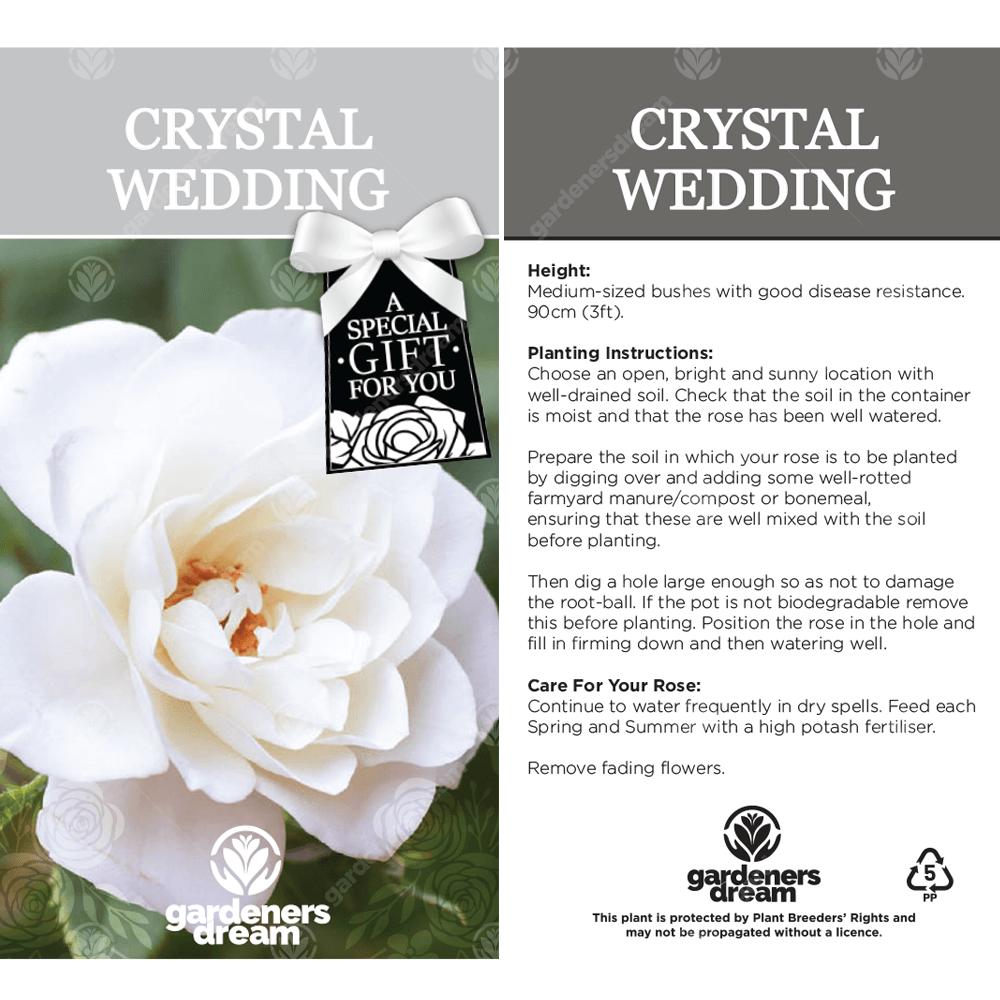 Crystal Wedding Rose 15th Wedding Anniversary Gift