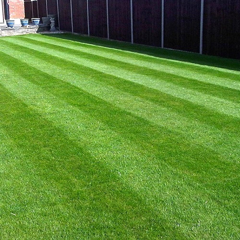 GardenersDream Gardenersdream Fine Lawn Golf Green Type ...