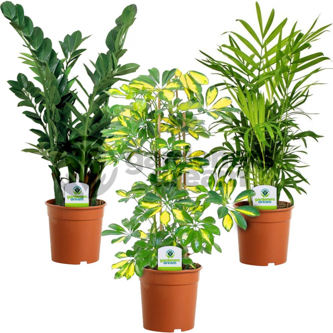 indoor plant mix 3 plants house office live potted