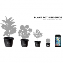 GardenersDream Indoor Plant Mix - 3 Plants - House / Office Live Potted Pot Plant Tree (Mix A)