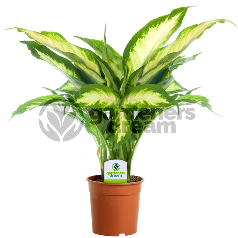 Large artificial house plants Large house plants