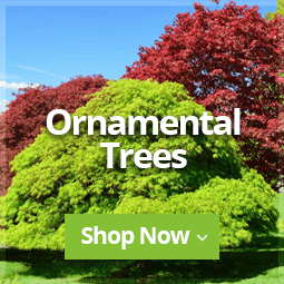 Ornamental Trees 2020