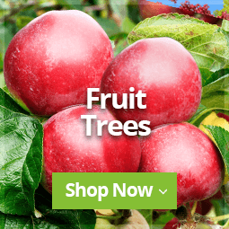 Fruit Trees 2020