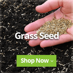 New Grass Seed