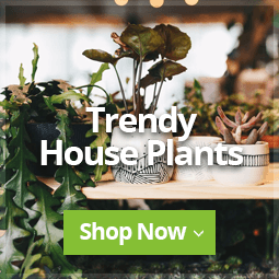 Trendy Houseplants