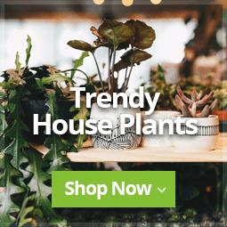 Trendy Houseplants