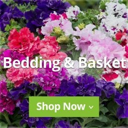Bedding & Basket