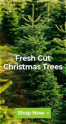 Seasonal - Real Trees