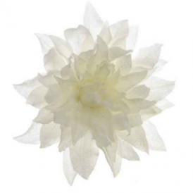 Silk Dahlia w/ Snowfin on Clip 20cm (White)